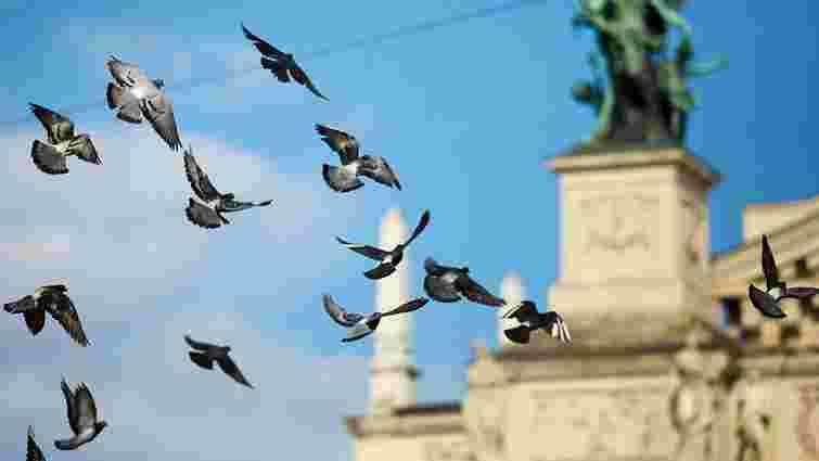 Львів'ян та гостей міста закликали не підгодовувати голубів на вулицях і площах