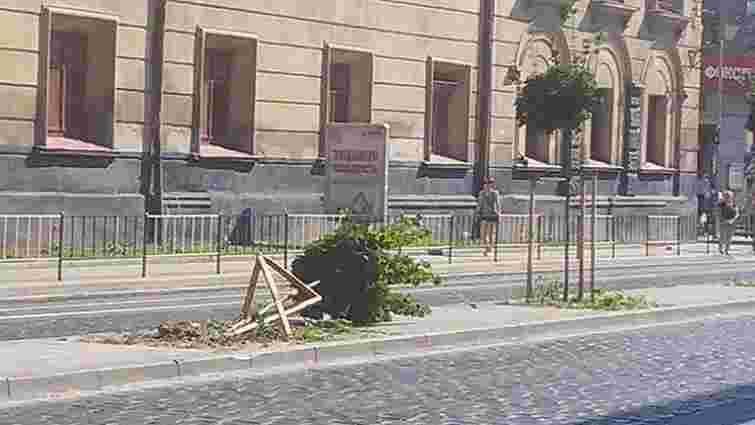 У центрі Львова викорчували посаджене волонтерами дерево