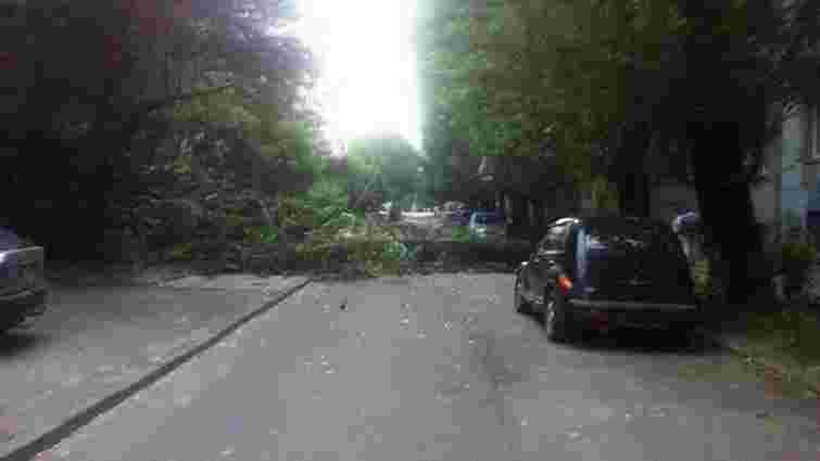 Внаслідок сильного вітру на проїжджу частину вул. Конотопської у Львові впало дерево