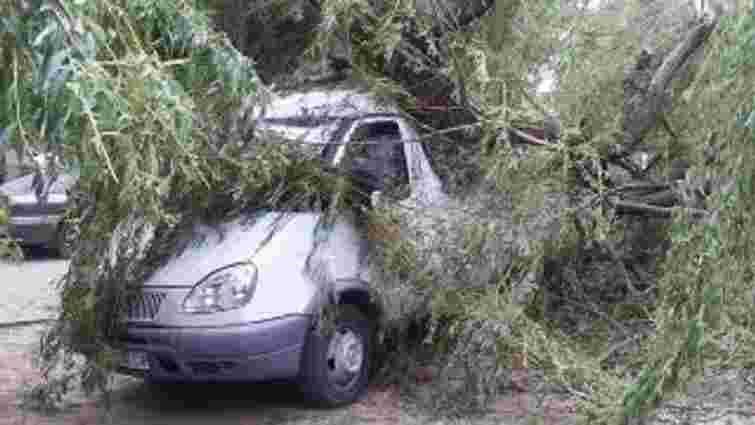 На вулиці Симоненка у Львові стара верба впала на дві автівки