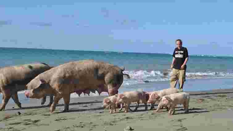 Уряд дозволив санстанції перевіряти свинарів