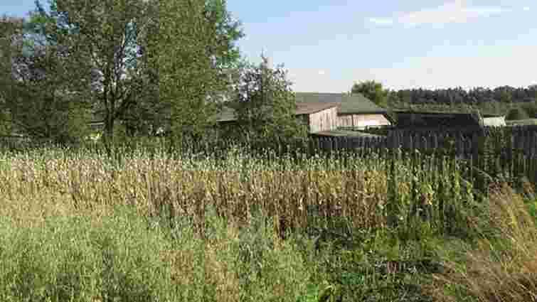 На Львівщині вилучили понад 43 тис. рослин коноплі та маку