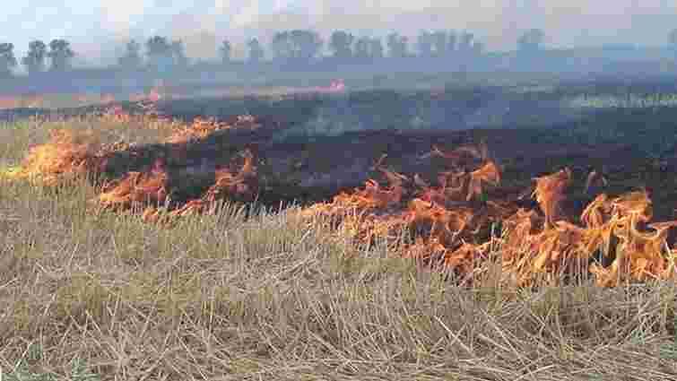 На Житомирщині згоріло близько 80 га пшениці