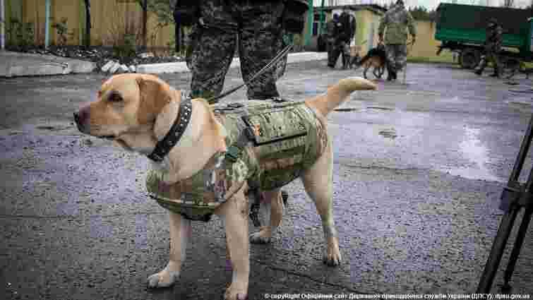 Луганські прикордонники одягнули службових собак у бронежилети
