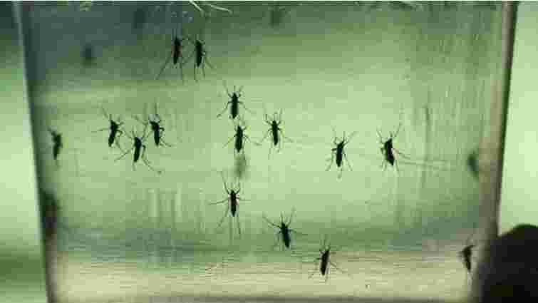 Комарі-переносники вірусу Зіка в Україні не водяться