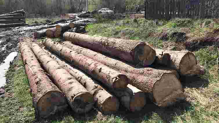 На Сколівщині СБУ викрила незаконну вирубку лісу на ₴100 тис.
