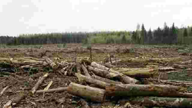 У Чопі СБУ затримала прикордонників на контрабанді лісу