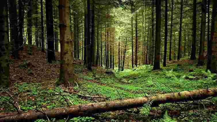 На збереження лісів Карпат виділили €14 млн грантових коштів