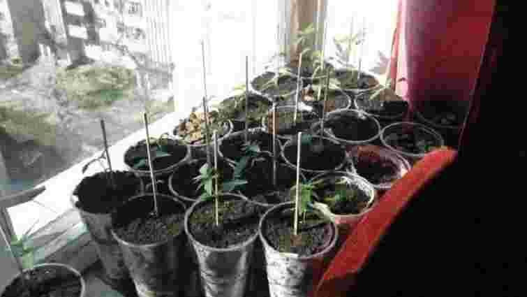Мешканець Львівщини вирощував коноплю у вазонах для квітів