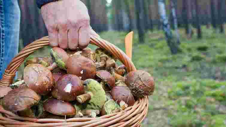 На Львівщині знайшли 82-річного пенсіонера, який заблукав у лісі