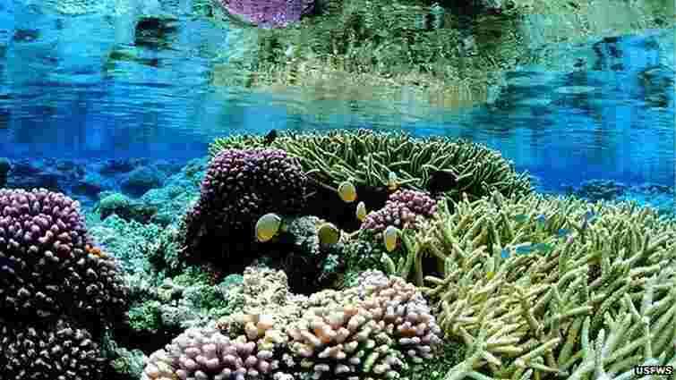 Біля Гавайських островів з'явиться найбільший у світі морський заповідник