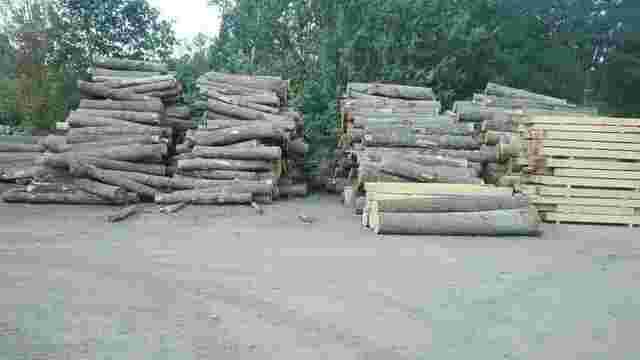 На Рівненщині вилучили понад 400 кубометрів незаконно вирубаної деревини