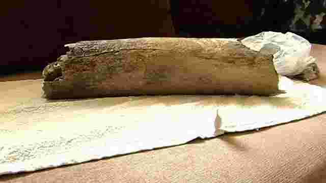 Мешканець Івано-Франківщини знайшов на своєму подвір'ї рештки мамонта