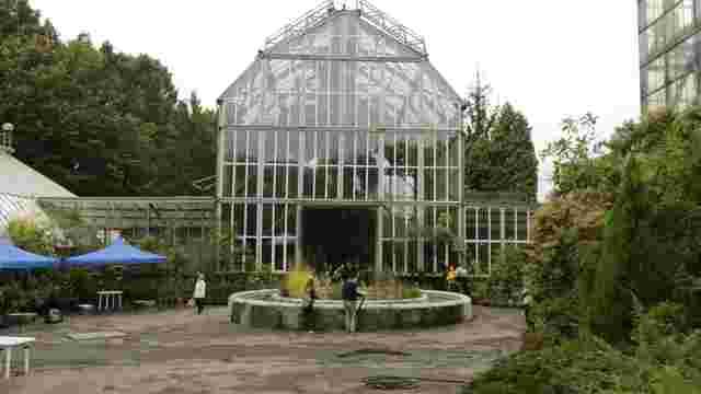 У Ботанічному саду Львова на один день відкрили виставку бонсай