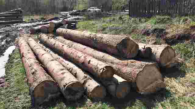 СБУ викрила незаконну вирубку лісу на Сколівщині