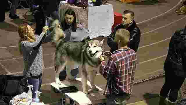 У Львові вперше провели змагання з собачого спорту