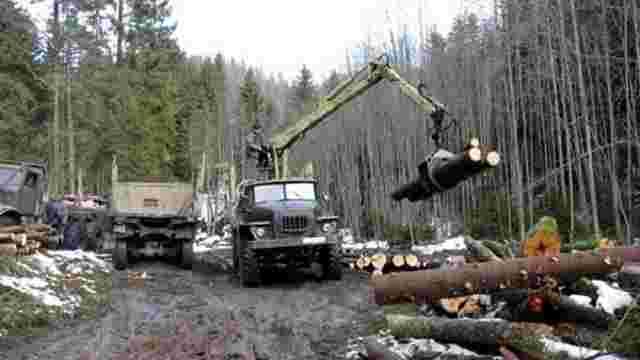 Кабмін схвалив нові правила вирубки лісів
