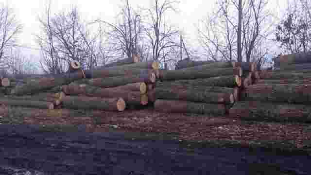 На Рівненщині вилучили партію незаконно вирубаної деревини