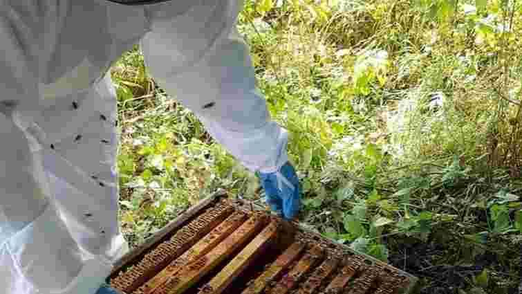 У Великобританії злодії-професіонали спромоглися викрасти 24 тис. бджіл
