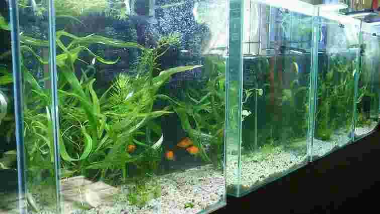 У Львівському еколого-натуралістичному центрі відкрили виставку акваріумів