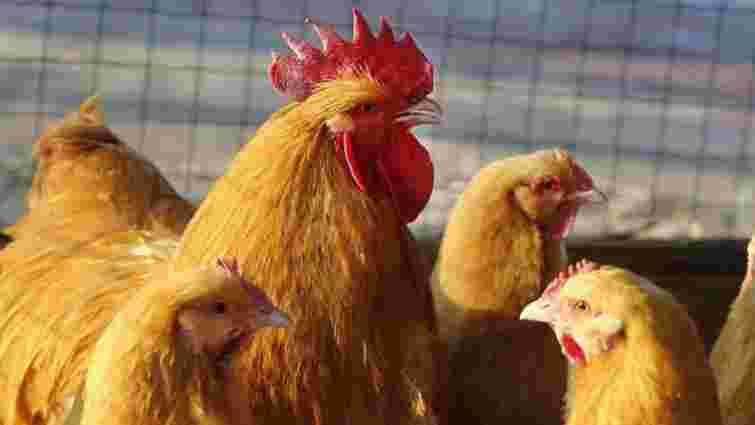 ЄС зняв обмеження на експорт птиці з більшості регіонів України