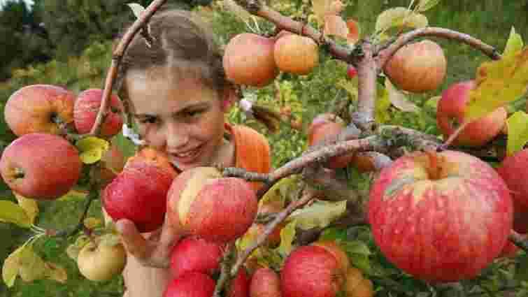 Аграрії прогнозують втрату половини врожаю фруктів та ягід через заморозки