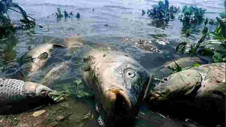 У річці на Тернопільщині через викид хлорного вапна загинула риба