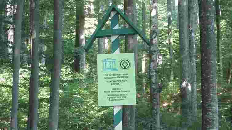 Ще одну частину букових лісів Карпат можуть внести до списку Всесвітньої спадщини ЮНЕСКО