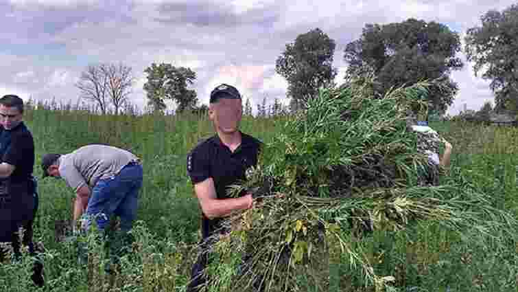 На Чернігівщині поліція знайшла замасковану плантацію коноплі на ₴7 млн