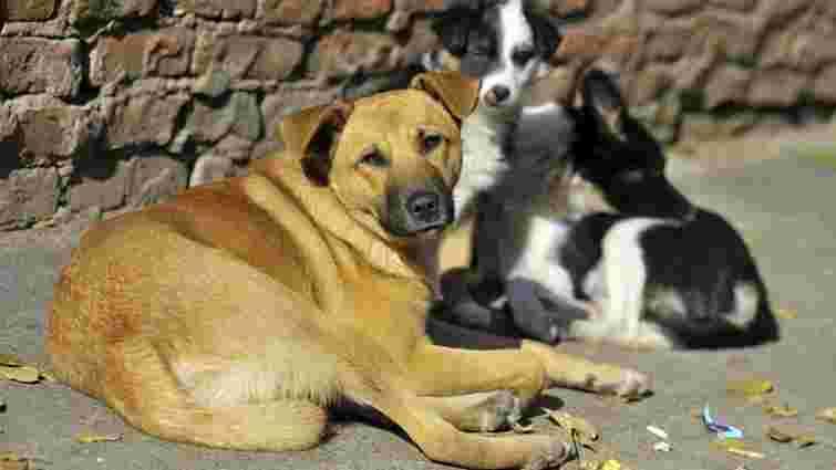 В Івано-Франківську мають намір створити єдину базу безпритульних собак