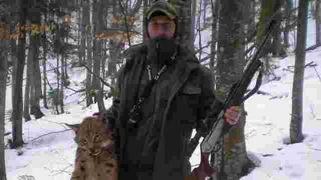 Ославлені лісники із Закарпаття заявили, що знайшли червонокнижну рись уже мертвою