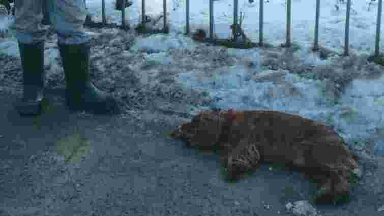 У Львові поліція затримала чоловіка, який вкрав і задушив собаку