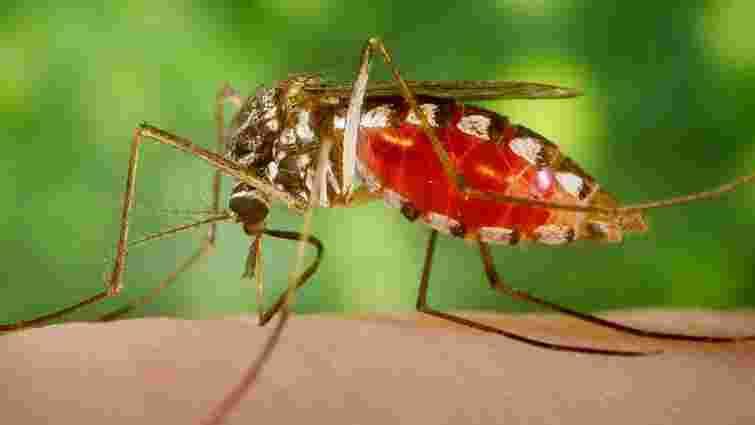 На водоймах Львова проведуть профілактику проти малярійних комарів