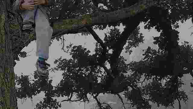 У Львові рятувальники допомогли 12-річному хлопцеві, який заліз на дерево та не зміг спуститися