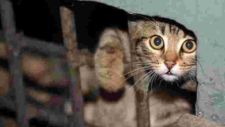 У Тернополі оголосили карантин через скажену кішку