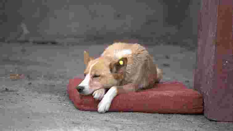 У Львові оголосили набір волонтерів для підрахунку безпритульних собак