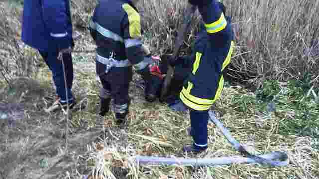 Бродівські рятувальники витягли з підмерзлого болота корову