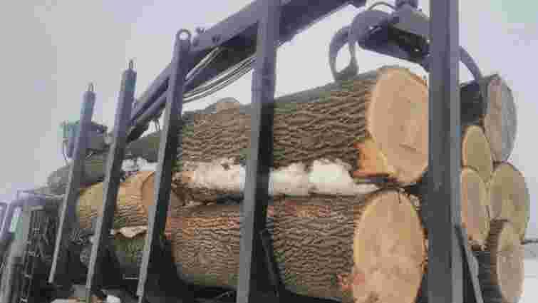 На Дніпропетровщині вирубали столітні дуби для продажу за кордон