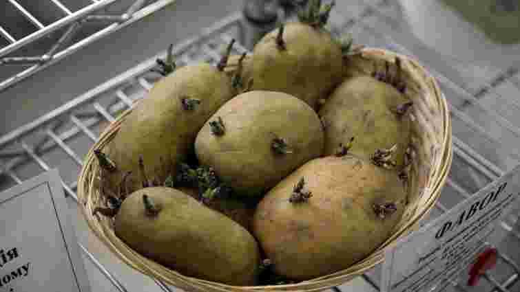 Ціни на картоплю в Україні сягнули 10-річного максимуму