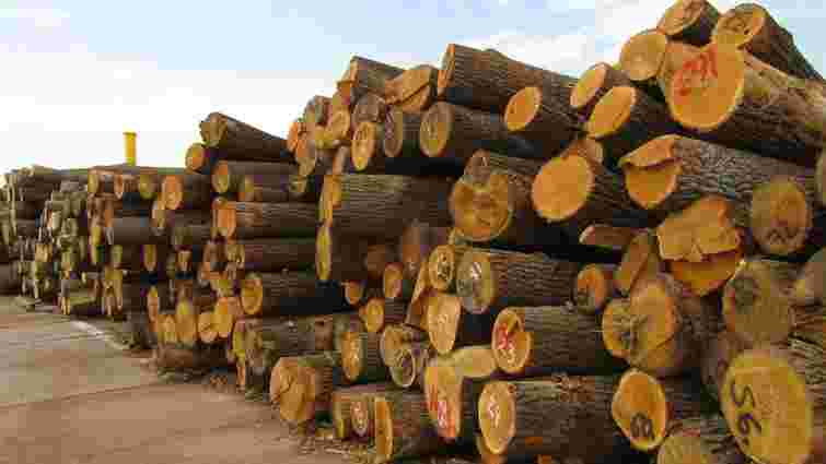 На Закарпатті нелегальні лісоруби закидали камінням поліцейських