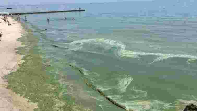 Через аномальне цвітіння водостей українцям порадили не купатися на узбережжі Одещини