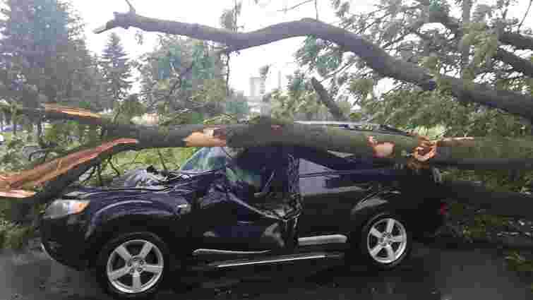 У Стрийському районі через падіння дерева на автомобіль постраждало двоє людей