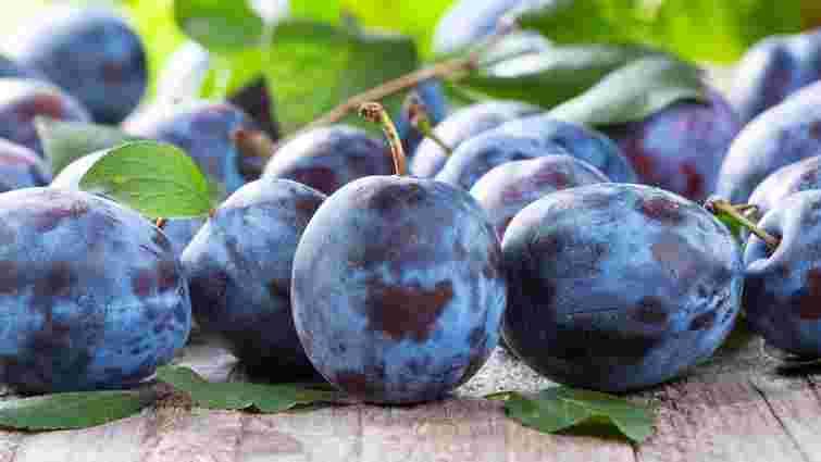 Слива цьогоріч стала найдешевшим фруктом в Україні