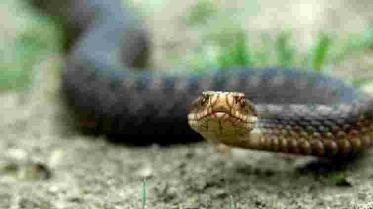 На Сколівщині четверо осіб потрапили до лікарні після укусу змій