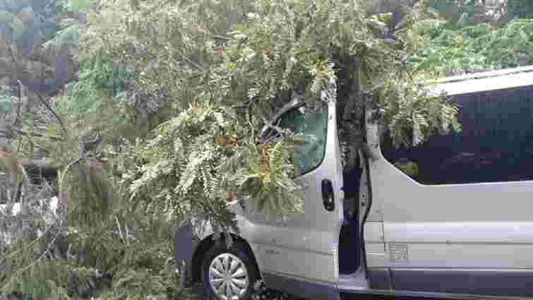 У Шегинях зламане дерево розбило мікроавтобус у черзі до кордону