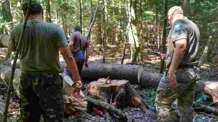 Працівників національного парку «Гуцульщина» спіймали на незаконній рубці лісу