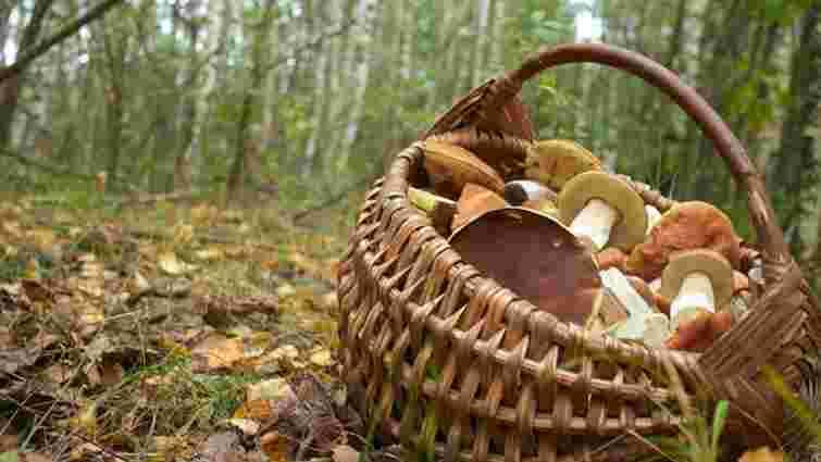 У Дрогобицькому районі на Львівщині чоловік помер під час збирання грибів