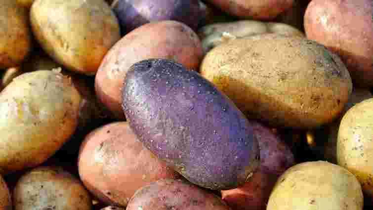 Імпорт картоплі в Україну вп'ятеро перевищив експорт