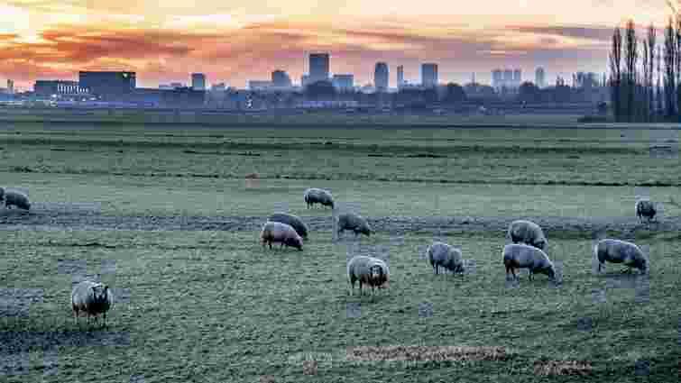 Синоптики попередили про нічні приморозки до -3°С в Україні
