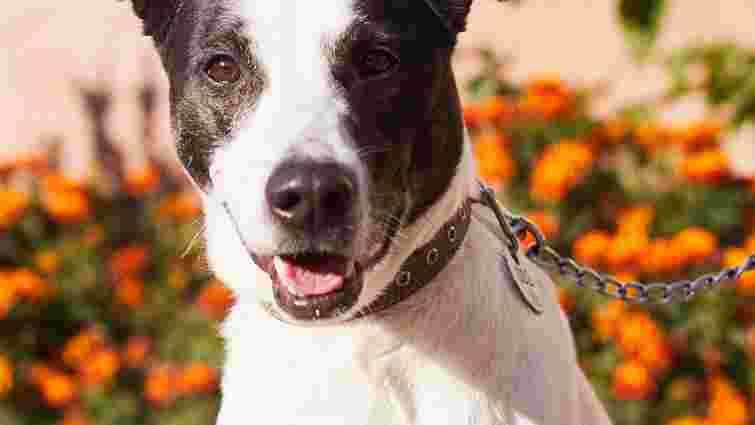 Чорно-біла Мілка та інші собаки